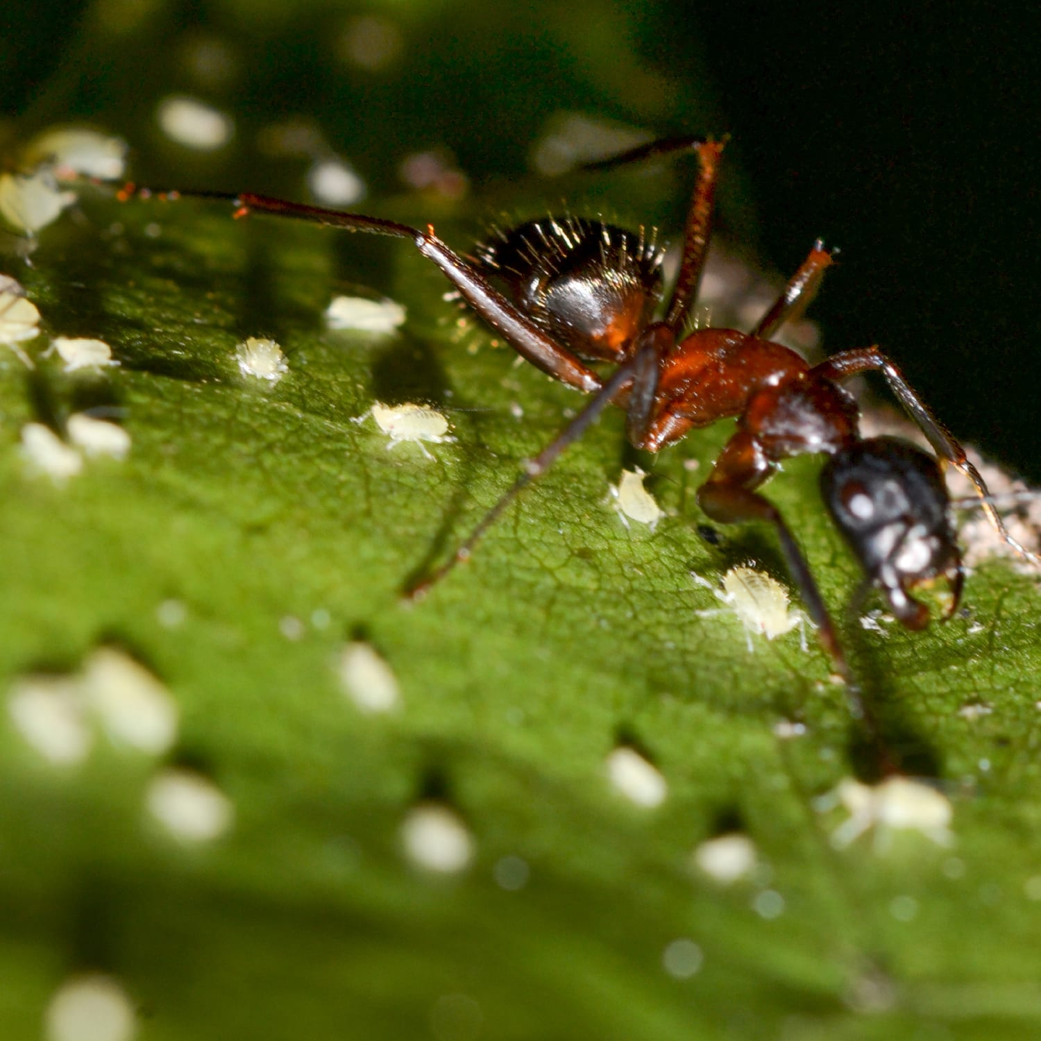 The Aphid Feeds on Plant Life