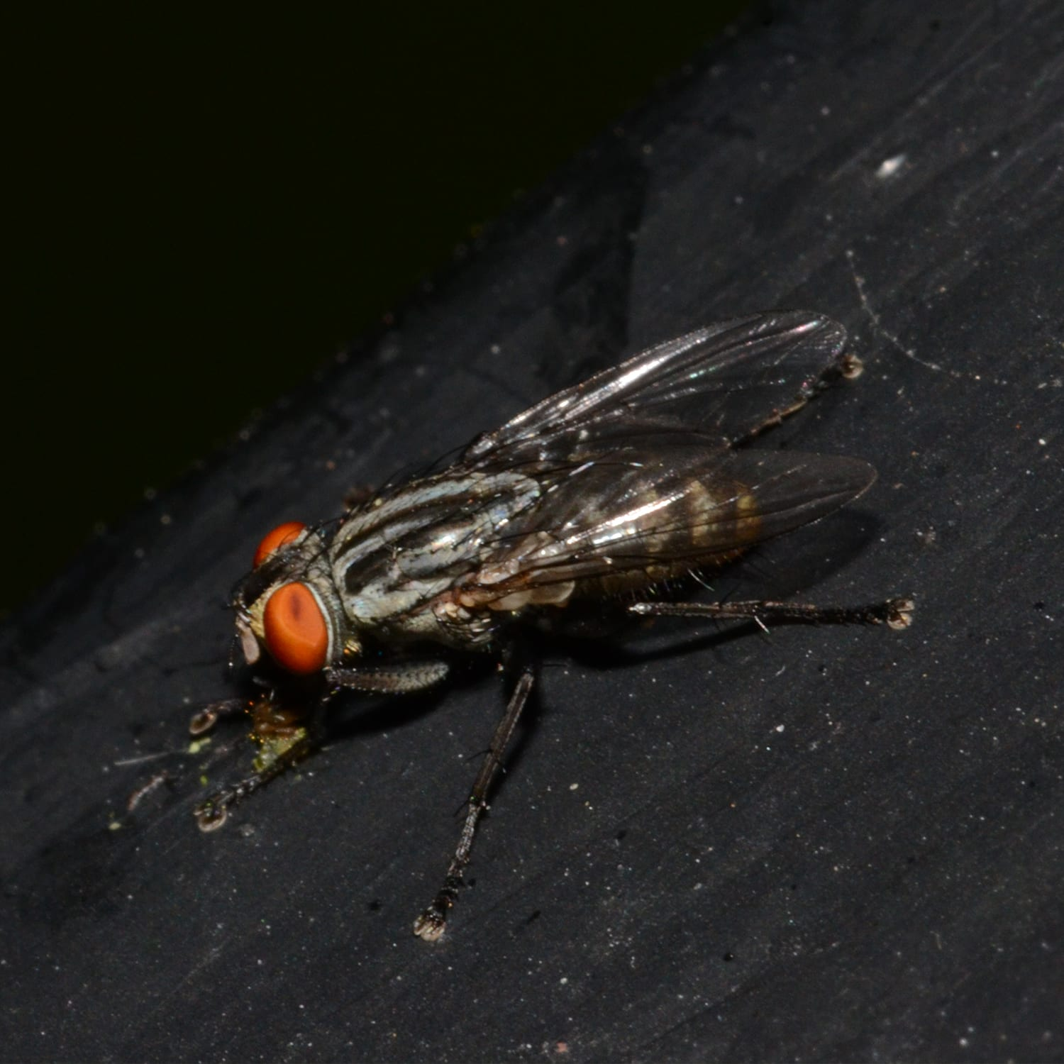 The Flesh Fly Back