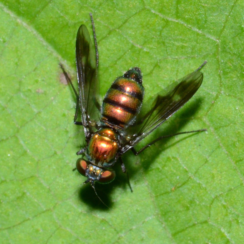 The Long-Legged Fly Back