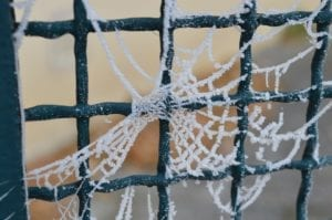 prevent spiders this winter with aaa exterminating in indianapolis indiana