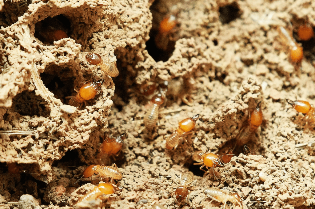 aaa exterminating in indianapolis indiana removes termites quickly and efficiently