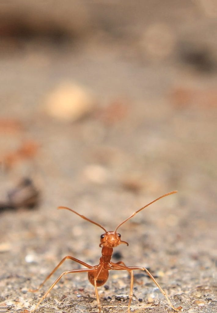 protect your home from ants this summer with aaa exterminating in indianapolis indiana