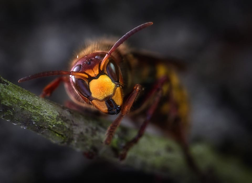 aaa exterminating can identify and remove your pests