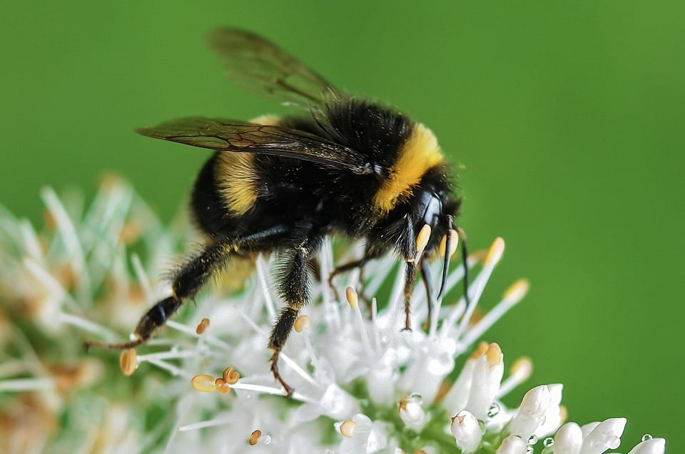 aaa exterminating offers safe bee removal in indianapolis indiana