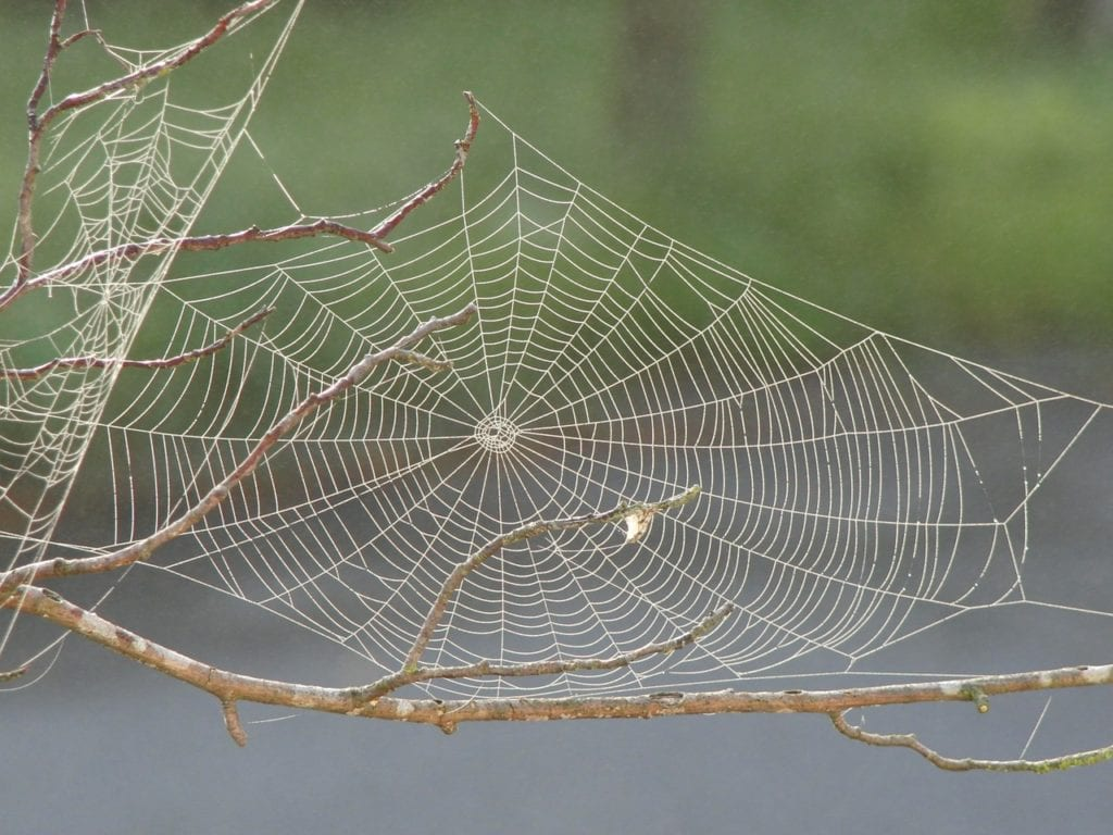 learn more about spider webs with aaa exterminating in indianapolis
