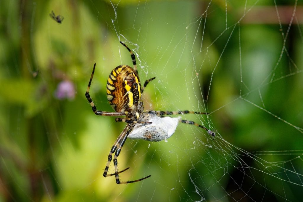 stop a spider infestation in your home and call aaa exterminating in indianapolis indiana