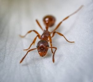 prevent an ant infestation with aaa exterminating