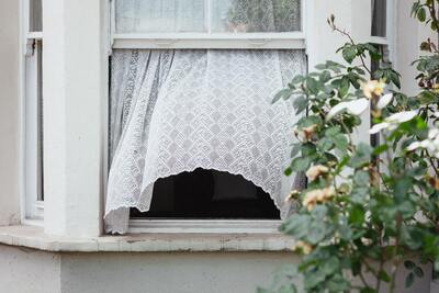 check all windows for rot to prevent an ant infestation