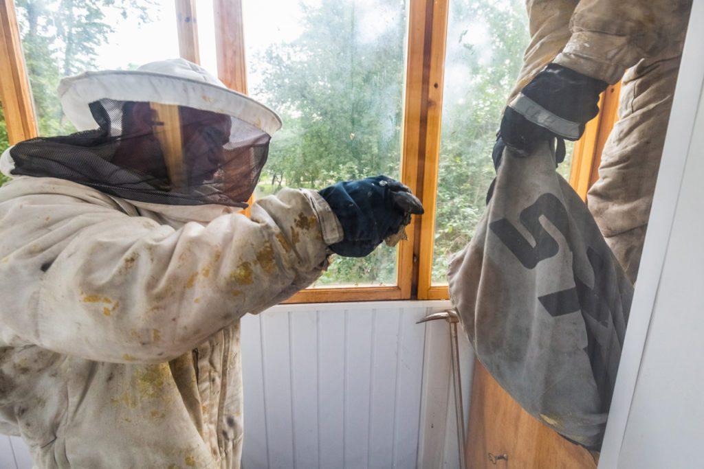 Yellow Jacket wasp nest removal indianapolis indiana